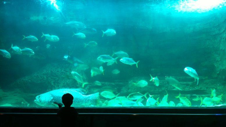 Pusat Akuarium Perikanan Pulau Pinang