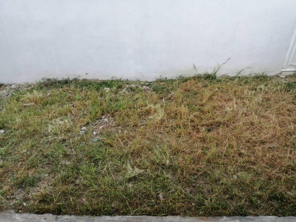 Rumput Setelah dipotong