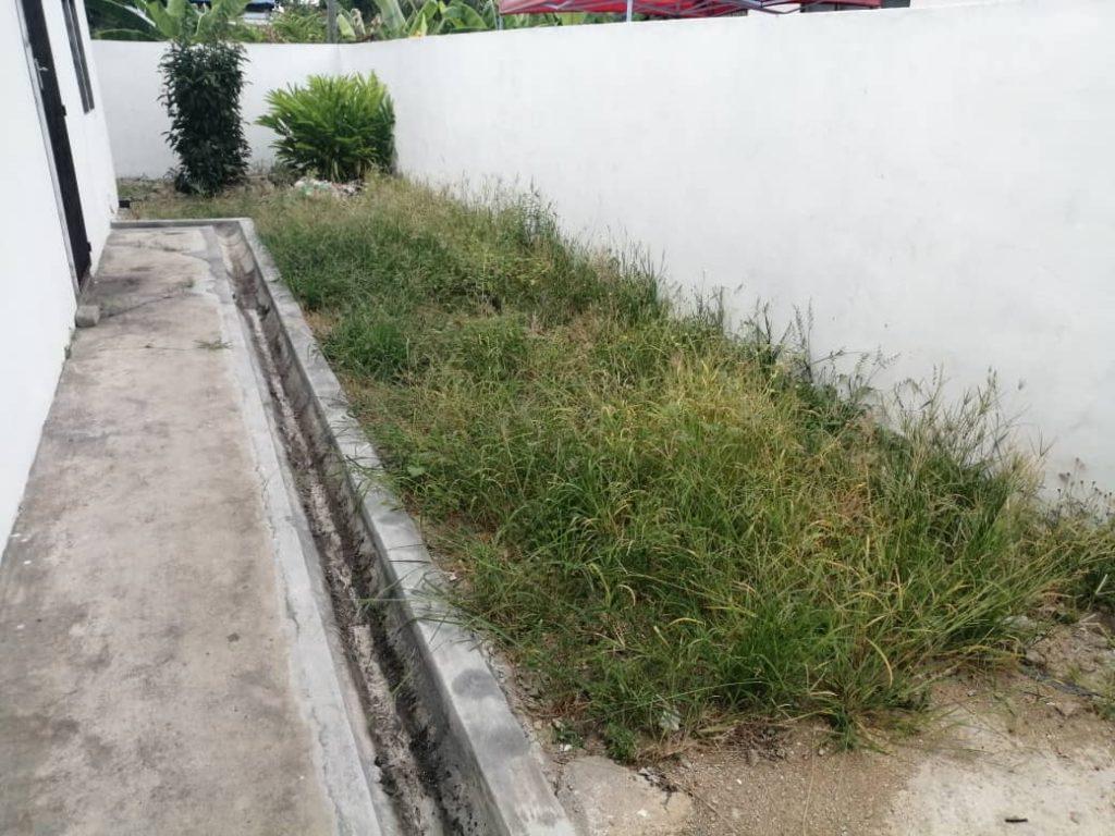 Rumput sebelum dipotong dengan mesin rumput